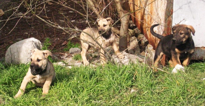 Бездомные животные в Геленджике