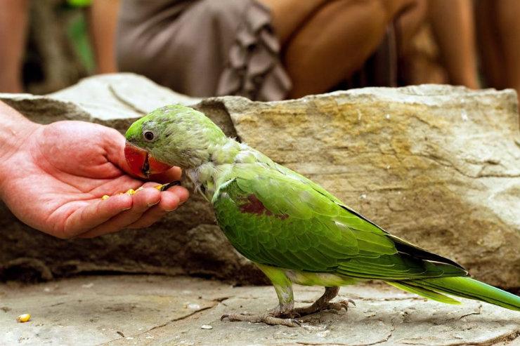 Полицейские Геленджика вернули в зоопарк похищенного попугая