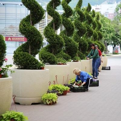 Высадка цветов в Геленджике