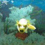 Выставка «Подводный мир»